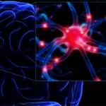 Отмирание клеток головного мозга у пожилых: что это и что делать