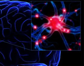 Отмирание клеток головного мозга у пожилых