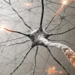 Восстанавливаются ли клетки(нейроны) головного мозга