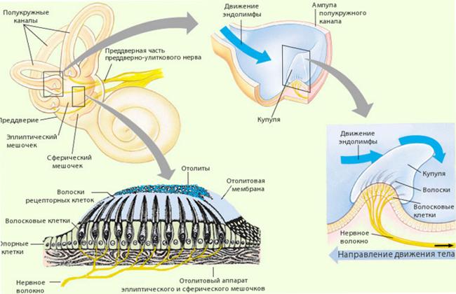 Схема головокружения