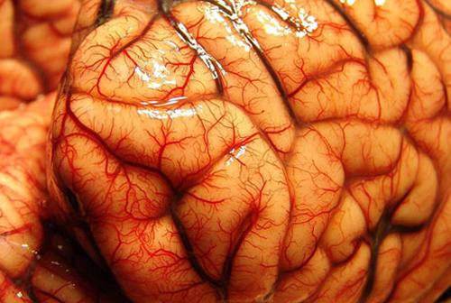 Алкоголь в мозгу