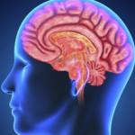 За что отвечает левое полушарие мозга